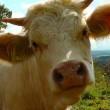 Witaminy i minerały w mleku – Mleczne ABC