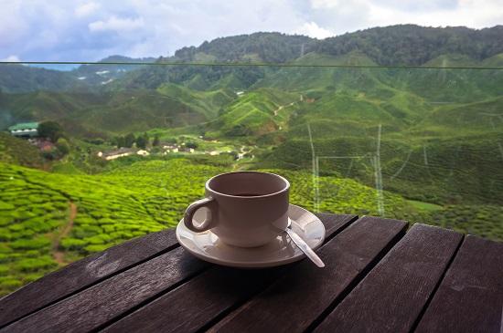 Sri Lanka , Cejlon z miłości do cejlońskiej herbaty