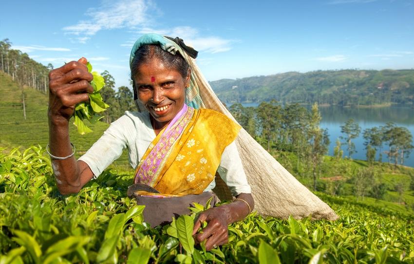 Aromat prosto ze Sri Lanki