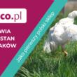 Frisco.pl w walce o godne warunki dla kurczaków brojlerów
