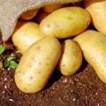 Dlaczego ziemniak jest ważny w diecie wegańskiej?