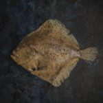 20 marca, obchodzony jako Międzynarodowy Dzień Bez Mięsa (Meatout Day) dlatego pora na: Turbot w roli głównej – ryba, której się nie oprzesz
